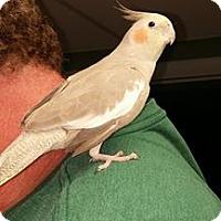 Adopt A Pet :: Sunset - Lenexa, KS