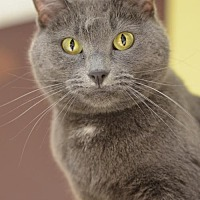 Adopt A Pet :: JJ161994 - Atlanta, GA