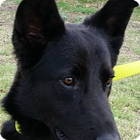 Adopt A Pet :: Vader - Dripping Springs, TX