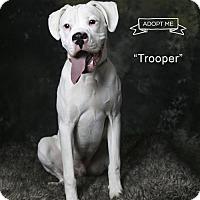 Adopt A Pet :: Trooper - Acton, CA