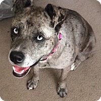 Adopt A Pet :: Pearl - Irmo, SC