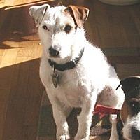 Adopt A Pet :: Zoe - Blue Bell, PA