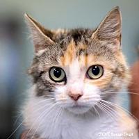 Adopt A Pet :: Quin - Bedford, VA