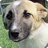 Adopt A Pet :: Jewell - Germantown, MD