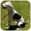 Photo 3 - Pit Bull Terrier Mix Dog for adoption in El Cajon, California - Sadie