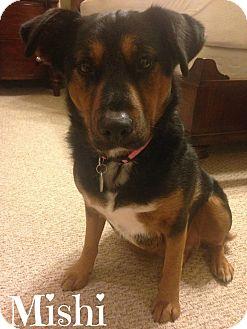 Australian Shepherd Mix Dog for adoption in Metairie, Louisiana - Mishi