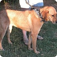 Adopt A Pet :: Cissy - Childress, TX