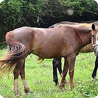 Adopt A Pet :: Lucky - Waleska, GA