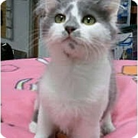 Adopt A Pet :: Chantilly - Anchorage, AK