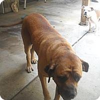 Adopt A Pet :: Hank - Dandridge, TN
