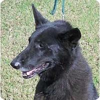 Adopt A Pet :: DEGA - Memphis, TN