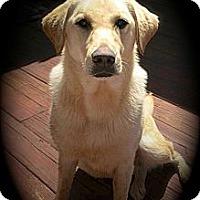 Adopt A Pet :: Alice - Flowery Branch, GA