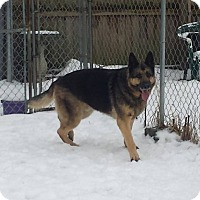 Adopt A Pet :: Ranger - Fayette City, PA