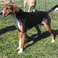 Adopt A Pet :: Hank - Seguin, TX