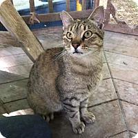 Adopt A Pet :: Thomas (in CT) - East Hartford, CT