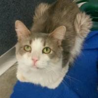 Adopt A Pet :: Mr. Meow - Fort Dodge, IA