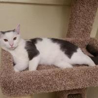 Adopt A Pet :: Moses - Phoenix, AZ
