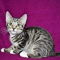 Adopt A Pet :: Tammy - Buford, GA