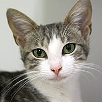 Adopt A Pet :: Leela - Pacific Grove, CA