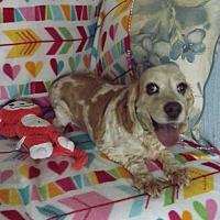 Adopt A Pet :: Watson -Adopted! - Kannapolis, NC