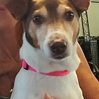 Adopt A Pet :: MILA - Fort Lauderdale, FL