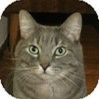 Adopt A Pet :: Blue - Vancouver, BC