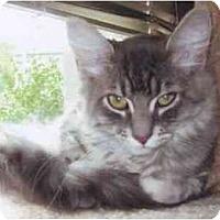 Adopt A Pet :: Kasey - Portland, OR