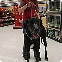 Adopt A Pet :: Sampson - Grand Rapids, MI