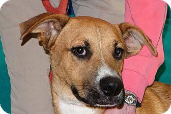 Retriever (Unknown Type) Mix Dog for adoption in Spokane, Washington - Goose