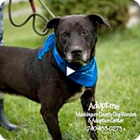 Adopt A Pet :: Sinclair - RESCUED! - Zanesville, OH