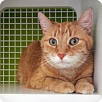 Adopt A Pet :: Simon - Troy, MI