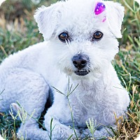 Adopt A Pet :: Baby Bella - Patterson, CA