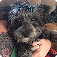 Adopt A Pet :: Pickles - Thousand Oaks, CA