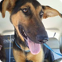 Adopt A Pet :: Duchess - Mount Holly, NJ
