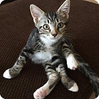 Adopt A Pet :: King - Oakdale, CA