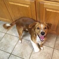 Adopt A Pet :: Cutie - Kirby, TX