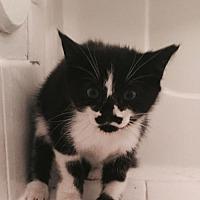 Adopt A Pet :: Tuna - Fort Lauderdale, FL