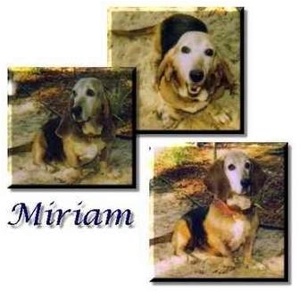 Basset Hound Dog for adoption in Marietta, Georgia - Miriam