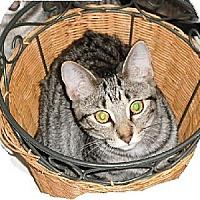Adopt A Pet :: Sunny - Kohler, WI