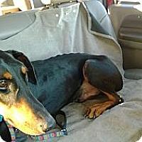 Adopt A Pet :: Costello - Allegan, MI