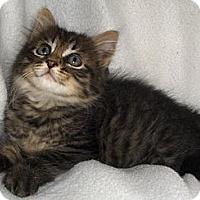 Adopt A Pet :: Dino - Richmond, VA