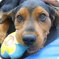 Adopt A Pet :: Rocky - Conyers, GA