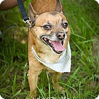 Adopt A Pet :: Tripp - Fort Valley, GA