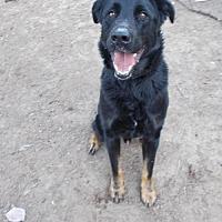 Adopt A Pet :: Kiser - Loganville, GA