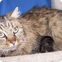 Adopt A Pet :: Nate - Colorado Springs, CO