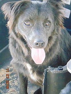 Labrador Retriever Mix Puppy for adoption in San Diego, California - Rockie