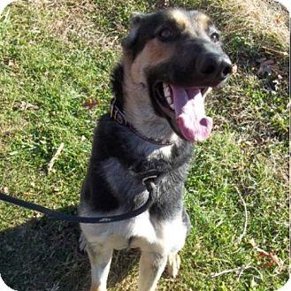 German Shepherd Dog Dog for adoption in New Ringgold, Pennsylvania - Zelda