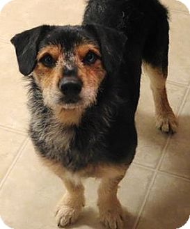 Terrier (Unknown Type, Medium) Mix Dog for adoption in Aiken, South Carolina - Moose