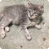 Adopt A Pet :: Zeke - Jackson, NJ