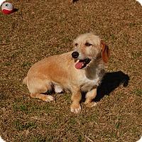 Adopt A Pet :: Colin - Manning, SC
